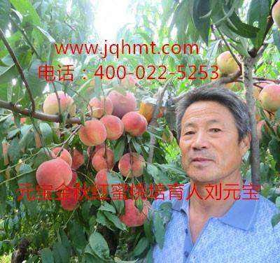 桃树病虫害及防治